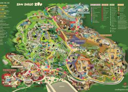 San Diego Zoo Map 2020: San diego zoo map 2020 from pinterest 3