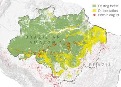 Amazon rainforest map from nytimes 2