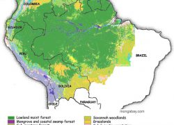 Amazon rainforest map from rainforests 3